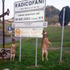 radicofani lupi impiccati