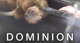 """""""Dominion"""" il documentario che dovrà spezzare il cuore a tutti"""