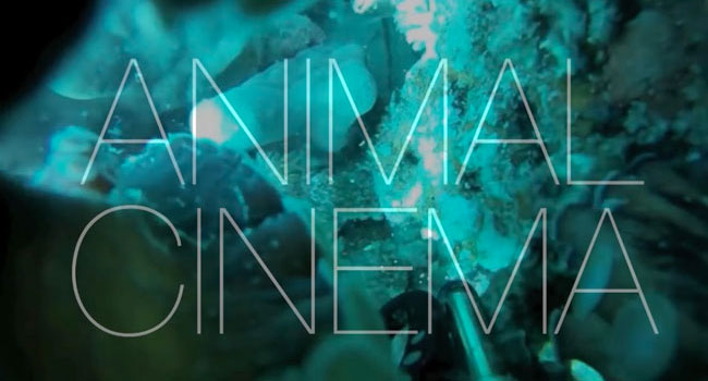 Animal Cinema, documentario in cui i registi sono gli animali