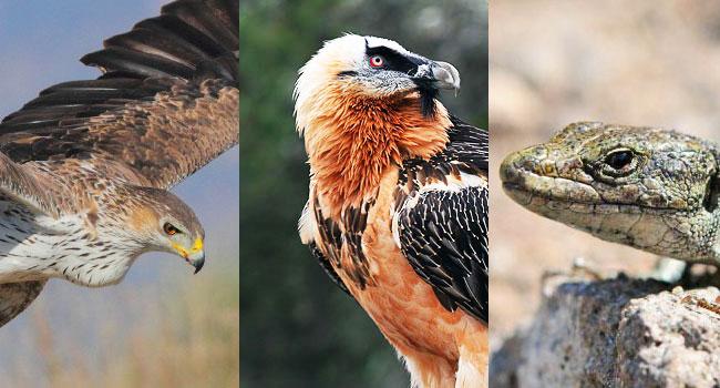 Animali-in-estinzione - Italia