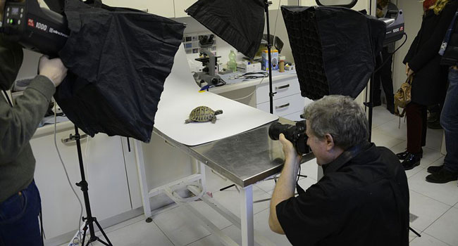 Photo-Ark-sartore-tartaruga