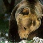 mappa 16 animali estinzione wwf