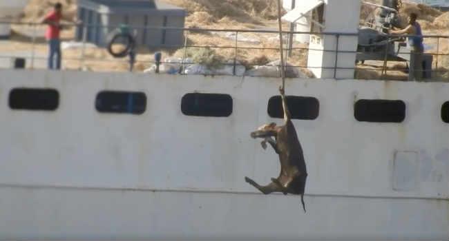 trasporto animali vivi dall'Europa
