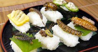 """Europa approva gli insetti a tavola: """"Un chilo di grilli come 6 Big Mac"""""""