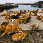 Isola-dei-gatti-Giappone