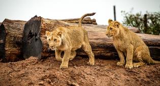 Leoni-eutanasia-zoo