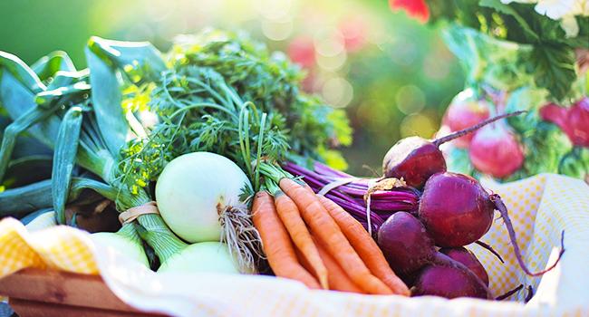 Proteine-vegetali-elenco
