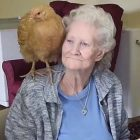 pet therapy galline