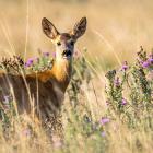 Poesia caccia