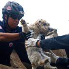 salvataggio-animali