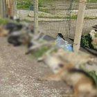 Cani-avvelenati-Sciacca