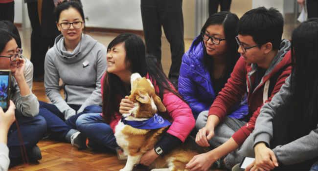 Cina benessere animale scuole