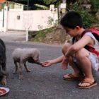 bambino filippine rifugio animali