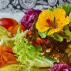 insalata con arance, radicchio e noci