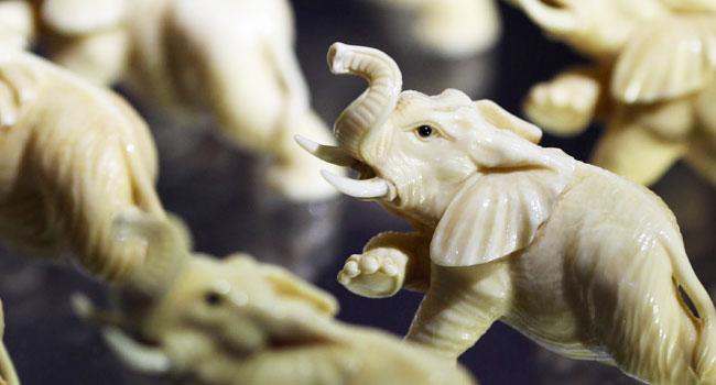 elefanti-in-estinzione-avorio