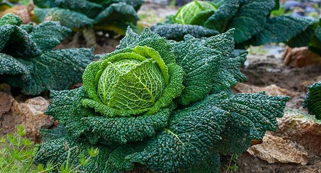 Vegetali-a-foglia-verde calcio