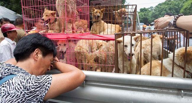 Attivista cinese Yulin