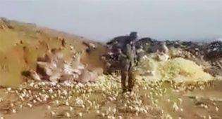 Georgia: pulcini nascono in discarica e invadono la città – Video