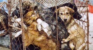 Riparte il Festival di Yulin: cos'è e quando è nata la manifestazione che ci indigna