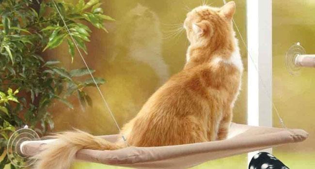 amaca gatto