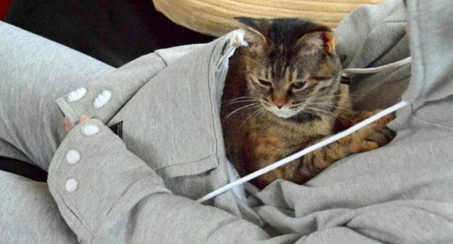 tuta coccole gatti