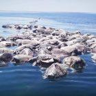 300-tartarughe-morte