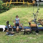 animal park cimone