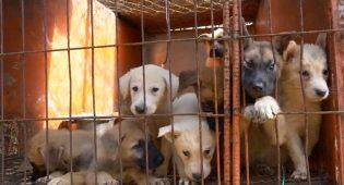 Carne di cane Corea