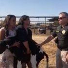 Attiviste vegane arrestate