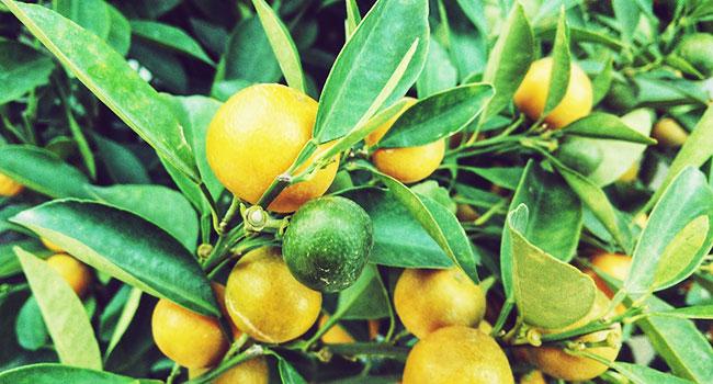 Cibi ricchi di vitamina C