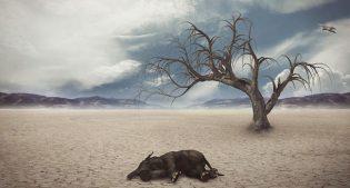 """WWF: """"In 40 anni abbiamo distrutto il 60% della fauna selvatica del pianeta"""""""