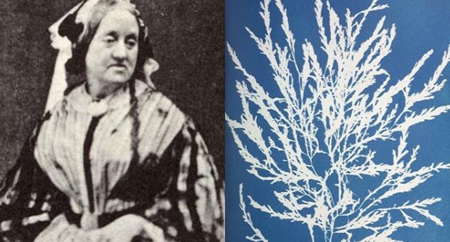 La poesia del mondo vegetale ritratta dalla prima fotografa della storia anna atkins bio - La finestra del mondo poesia ...