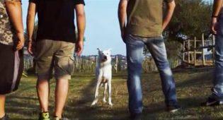 Il cane Angelo torna a vivere sullo schermo: la sua storia diventa un film