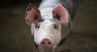 Ricerca Oxford tassazione carne