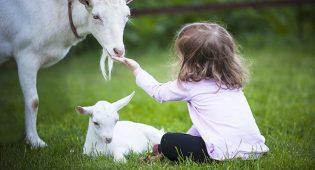 I bambini sono naturalmente antispecisti: un libro ci spiega perché