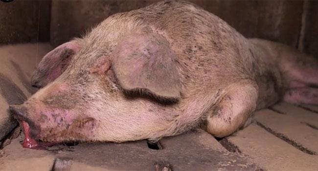 Maltrattamento animali ministro costa