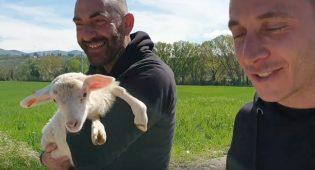 Ecco Alba, salvata dal macello e le lacrime di chi non ha potuto fare di più – Video