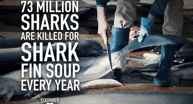 strage di squali ogni anno