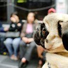 Milano mezzi pubblici gratis animali