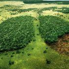 Deforestazione foresta amazzonica Bolsonaro