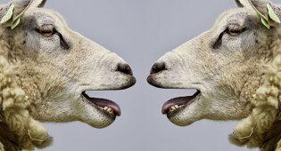 Perché i vegani stanno antipatici a tutti?
