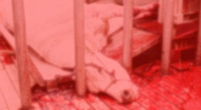Mostrare-immagini-violente-sugli-animali-serve