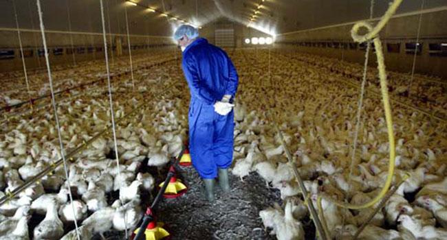 """""""O que fazemos com os animais é aterrorizante, optamos por comer vegetais"""" 6"""