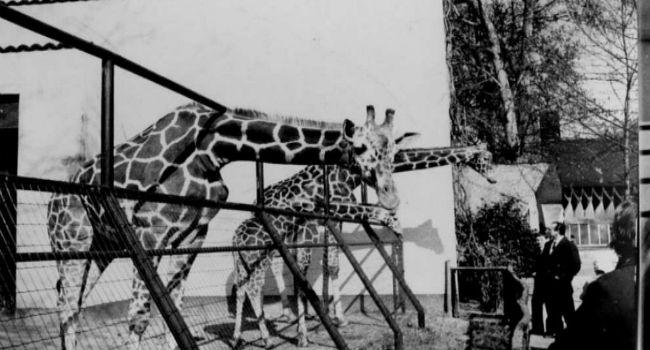 o museu internacional de marionetes nascerá no antigo zoológico Michelotti 4