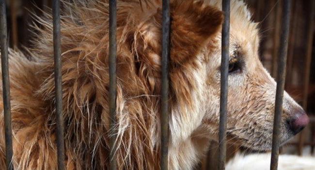 """""""Cães não são comida, mas animais de estimação"""" 1"""