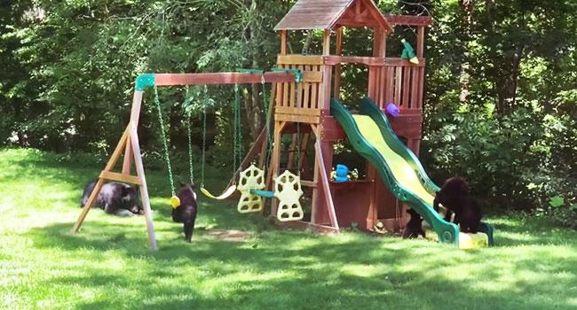 mãe assiste os filhotes enquanto brincam como crianças no parque equipado 1