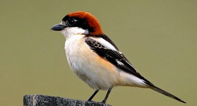 """Os pássaros nos dizem que o meio ambiente está sofrendo: """"Precisamos poluir menos"""" 15"""