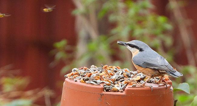 """Os pássaros nos dizem que o meio ambiente está sofrendo: """"Precisamos poluir menos"""" 16"""