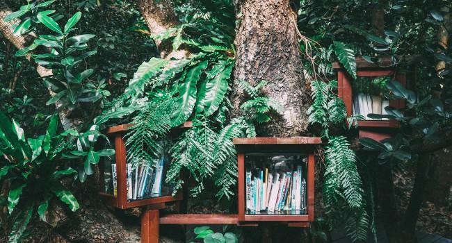 Livros de verão: 10 leituras para refletir sobre estilos de vida e sustentabilidade 1
