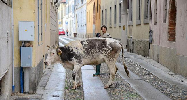 """em um ensaio, o papel dos animais mostrando as """"feridas"""" da sociedade 16"""